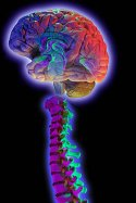 bigstock_brain_and_spine_on_black_828304PS70E2BRAIN.jpg