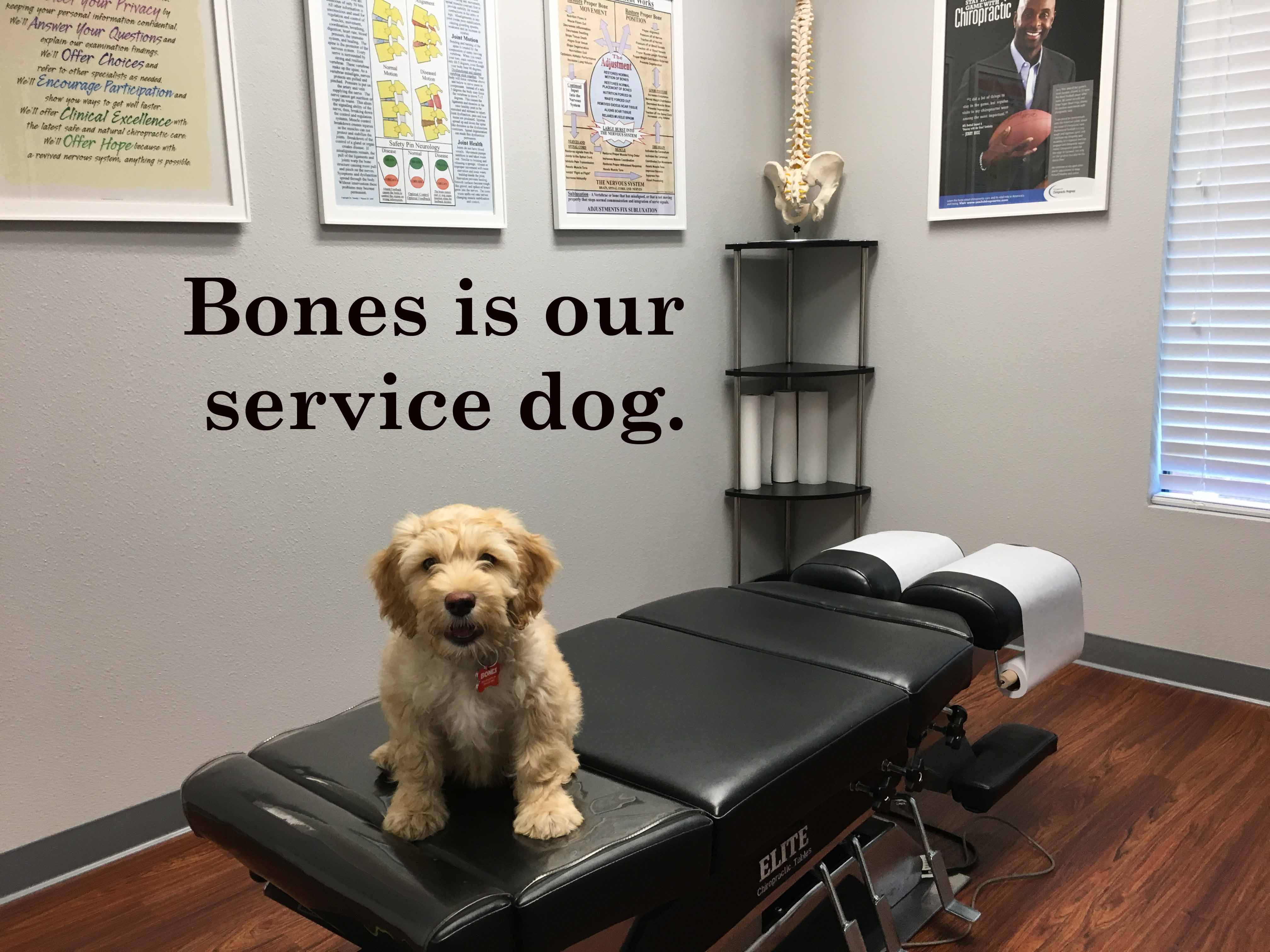 Bones is our service dog at Weimer Chiropractic,